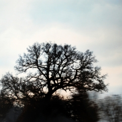 photographie-2009